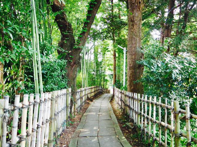 神峰神社の自然