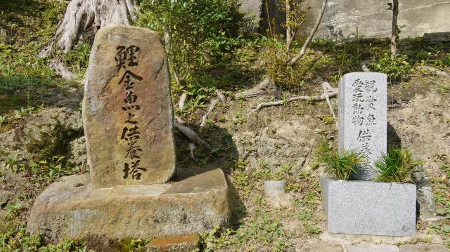 鹿苑寺(金閣寺)の近くの神社お寺|天龍神大神社