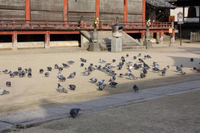 広島県浄土寺の動物