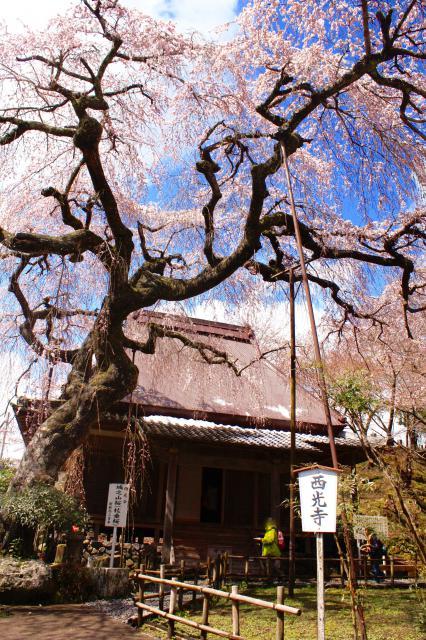 奈良県西光寺の自然
