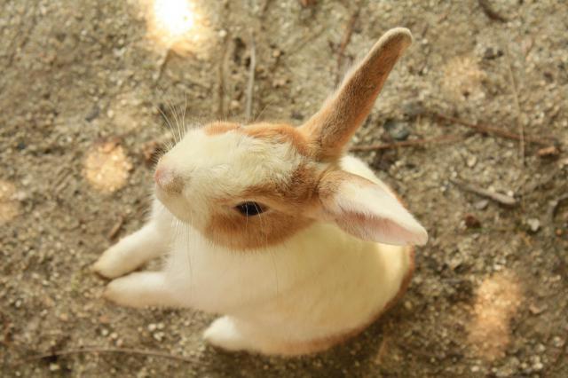 広島県大久野島神社の動物