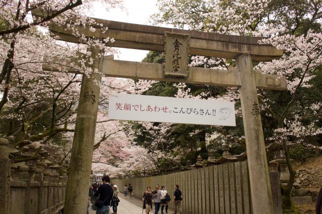 香川県金刀比羅宮の鳥居
