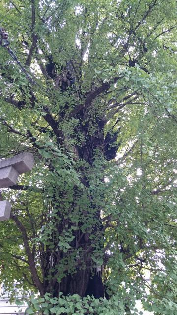飛木稲荷神社(東京都曳舟駅) - 自然の写真