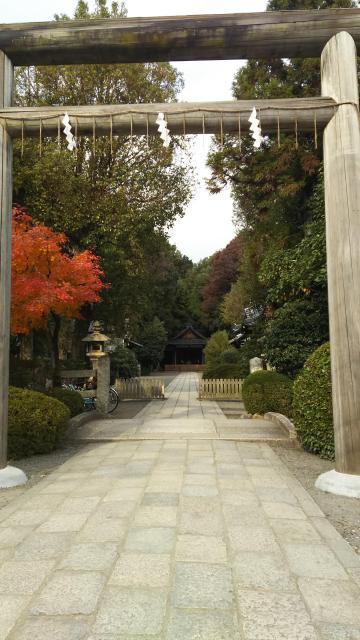 京都府木嶋坐天照御魂神社の鳥居