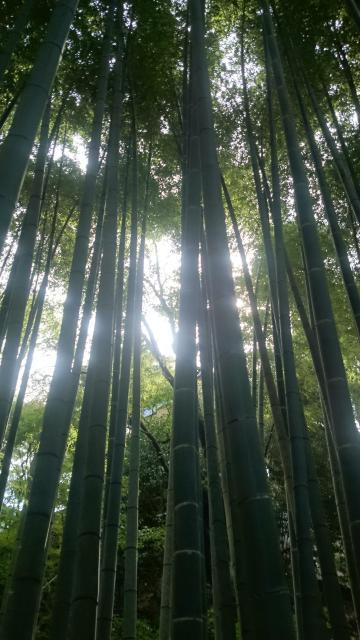 圓光寺の自然