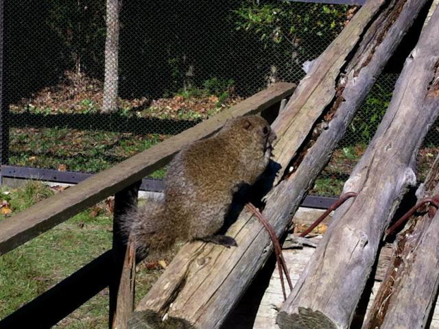 東本願寺本廟 牛久浄苑の動物