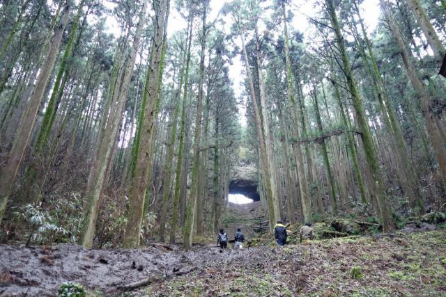 熊本県上色見熊野座神社の自然