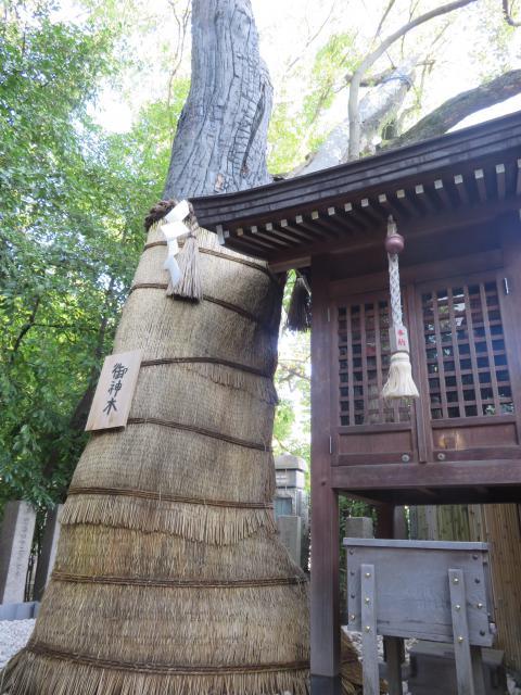 堀越神社(大阪府天王寺駅) - 自然の写真