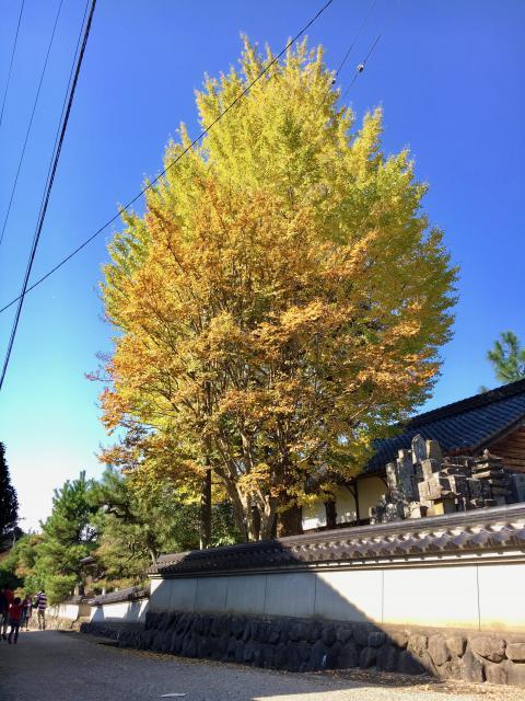 兵庫県本高寺の自然
