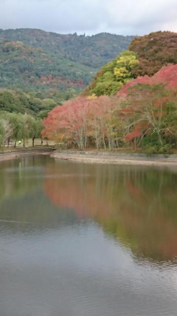 奈良県瑜伽神社の自然