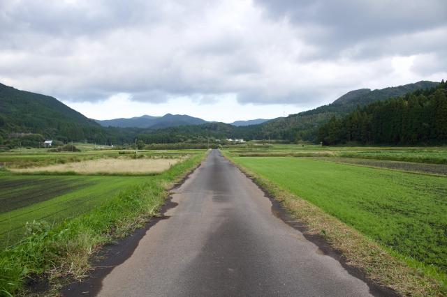 鹿児島県豊玉姫神社の自然