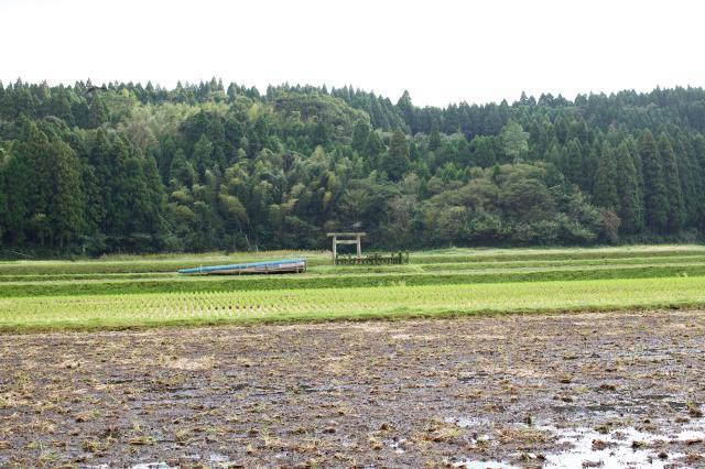 豊玉姫神社の自然