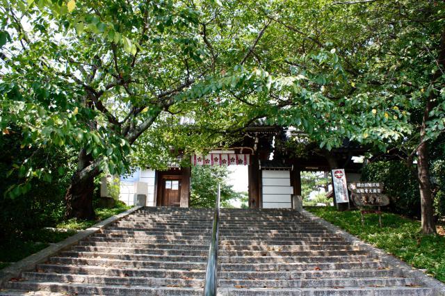 道明寺の近くの神社お寺|道明寺天満宮