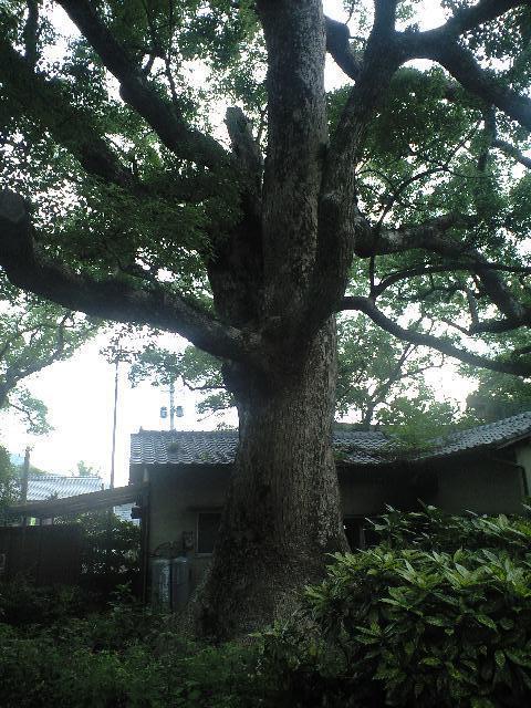 福岡県宇美八幡宮の自然