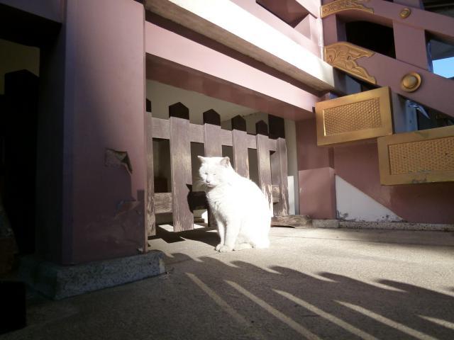 今戸神社の動物