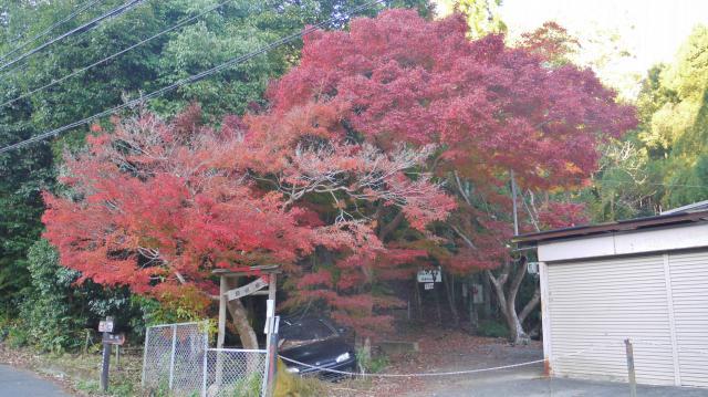 讃州寺の自然