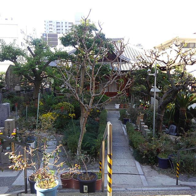 藤次寺の近くの神社お寺|蓮光寺