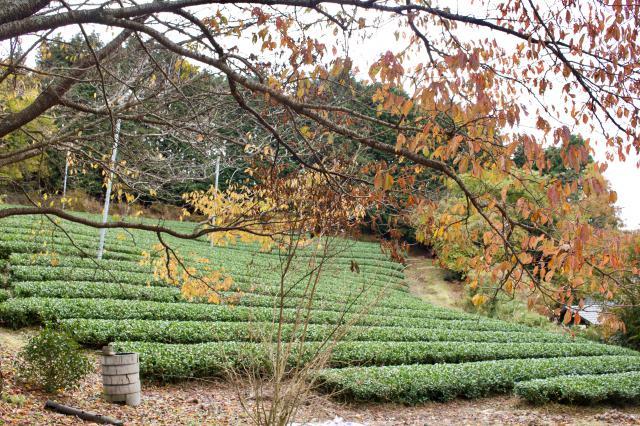 京都府泥洹寺の庭園