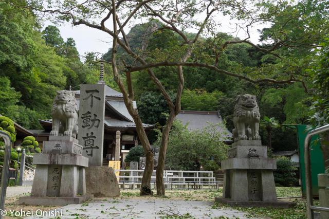 香川県大窪寺の狛犬