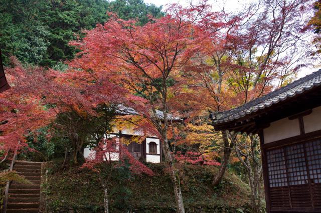 京都府正法寺の自然