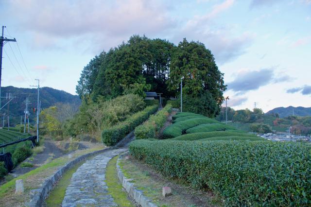 京都府安積親王陵墓の自然
