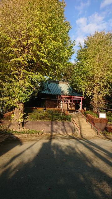 神奈川県上和田信法寺別院薬王院の自然