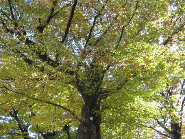 多賀神社の自然