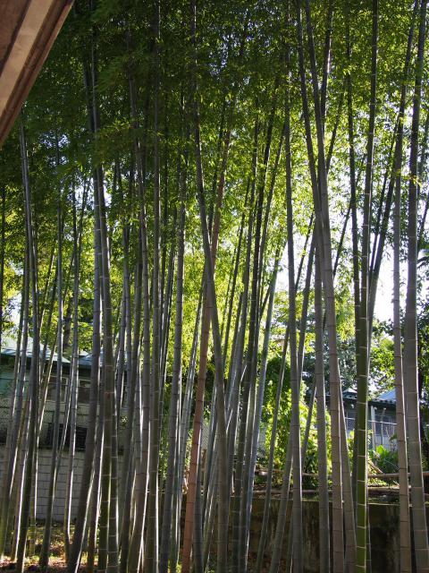 乗泉寺の自然