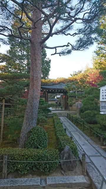 大仙院(京都府北大路駅) - 自然の写真