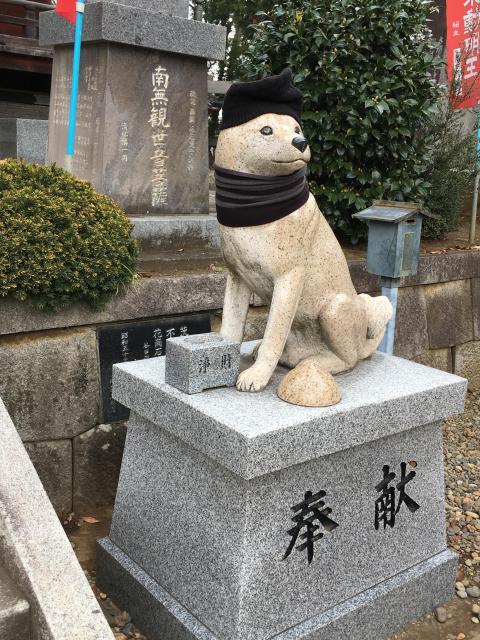 不動院の狛犬