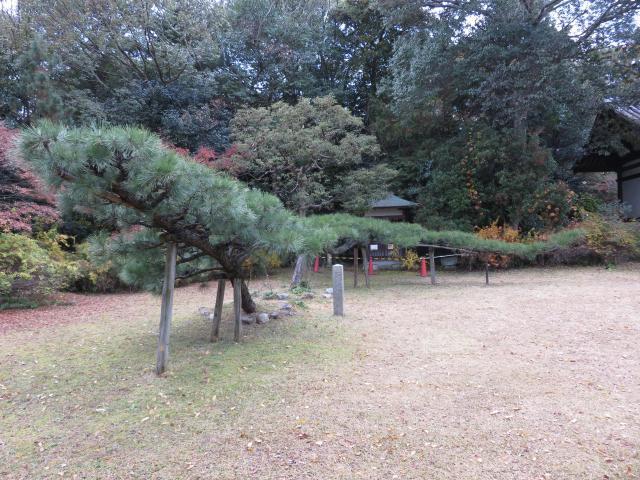 海龍王寺の自然