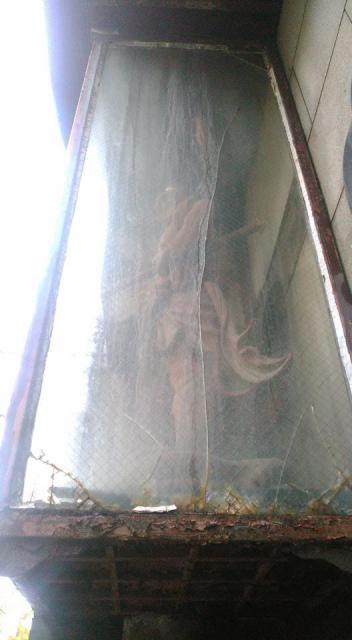 弘願寺の仏像