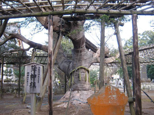 鏡忍寺の自然