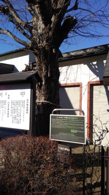 葛飾氷川神社(東京都堀切菖蒲園駅) - 自然の写真