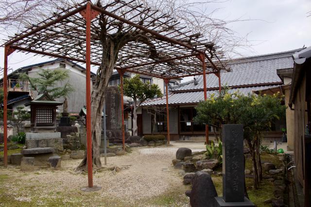法蓮寺の自然