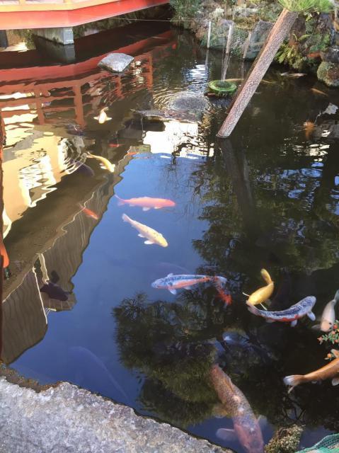 栃木県今泉八坂神社の自然