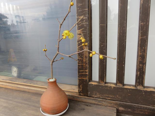 相国寺の自然
