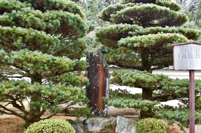 佛光寺本廟の自然