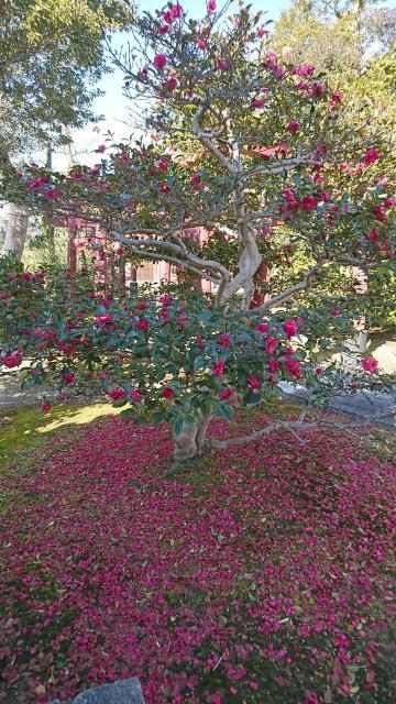 滋賀県大徳寺の庭園
