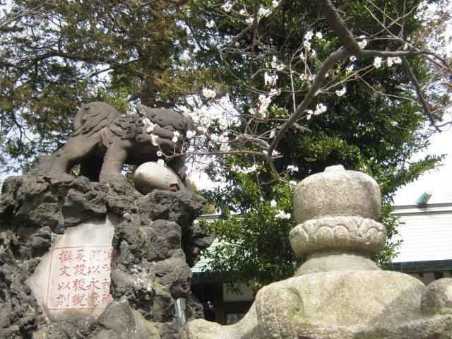 吾妻神社(神奈川県山手駅) - 狛犬の写真