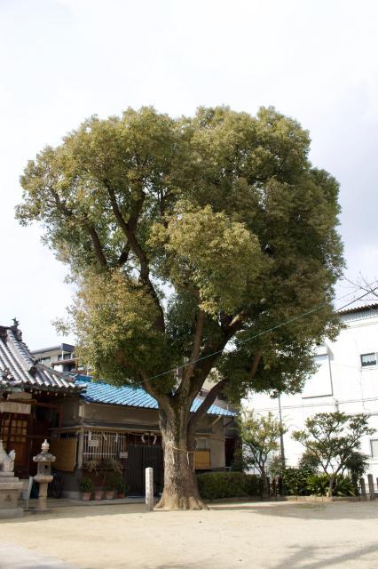 跡部神社の自然