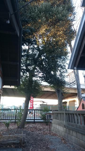 神奈川県神明大神宮の自然