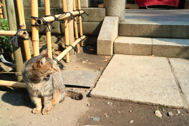 小野照崎神社の動物