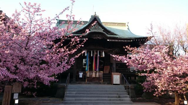 桜神宮の自然