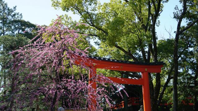 京都府城南宮の鳥居