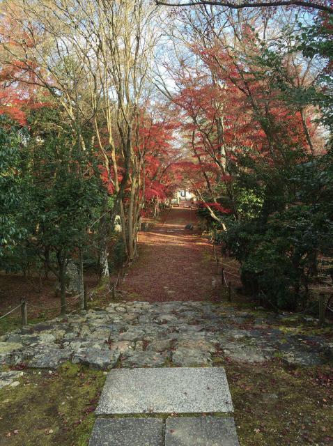 浄住寺の自然