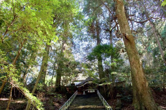 宮崎県くし触(くしふる)神社の写真