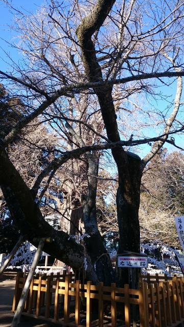 水戸八幡宮(茨城県常陸青柳駅) - その他建物の写真