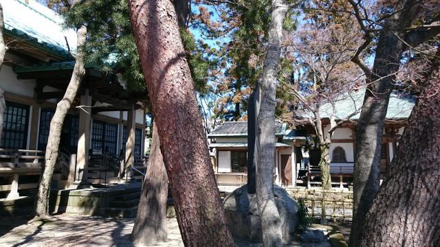 専念寺の自然