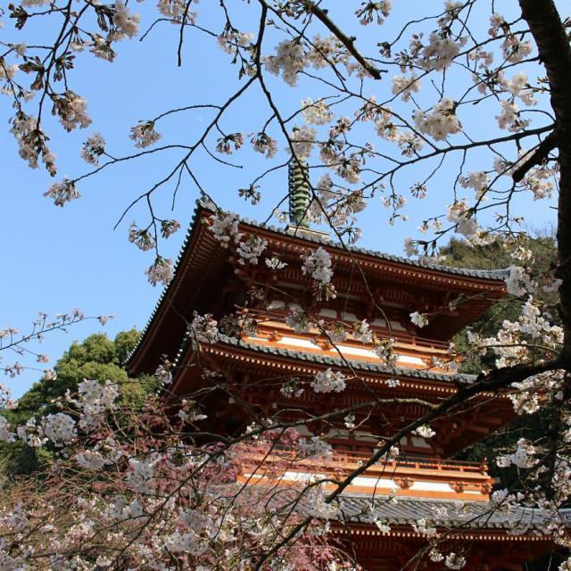 清水寺の自然